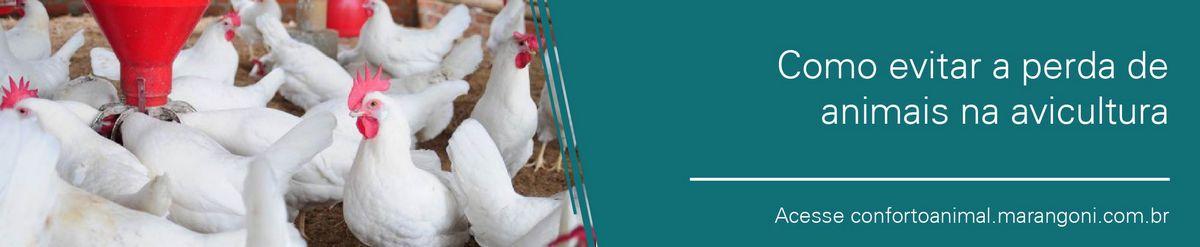Como evitar a perda de animais na avicultura